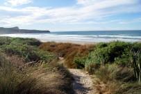 Coastal habitat planting